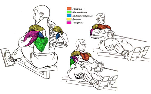 мышцы спины упражнения.